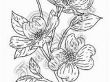 Dogwood Tree Coloring Page 69 Best Dogwoods Images On Pinterest