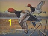 Duck Hunting Wall Murals 45 Best Redhead Duck Images