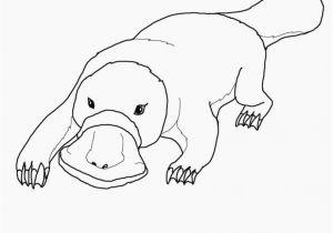 Duckbill Platypus Coloring Page Best Duckbill Platypus Coloring Page Coloring Pages