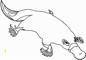 Duckbill Platypus Coloring Page Coloring Pages Duck Billed Platypus Coloring Pages