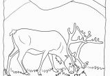 Earth to Echo Coloring Pages Real Reindeer Coloring Pages From Our Real Animal Coloring Pages