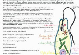 Euglena Coloring Page Euglena Coloring Page Coloring Pages Coloring Pages