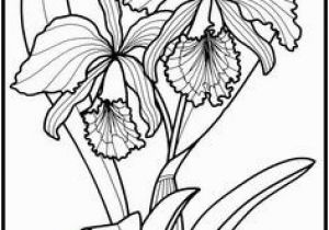 Exotic Flower Coloring Pages 615 Best Z Coloring Flowers butterflies Dragonflies & Etc