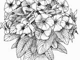 Flower Coloring Pages Printable for Adults Flower Coloring Pages for Adults Best Coloring Pages for