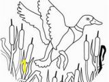 Flying Crow Coloring Page Ducksdrawings Flying Mallard Duck Coloring Page
