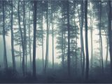 Foggy forest Wall Mural Sea Of Trees forest Mural Wallpaper