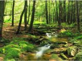 Forest Stream Wall Mural forest Wallpaper River forest Wall Mural Green forest