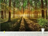 Forest Woodland Wall Murals Spring forest Pat Pinterest