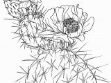 Free Cactus Coloring Pages Opuntia Nopal or Prickly Pear Cactus Super Coloring