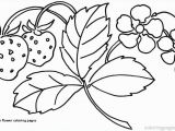 Free Coloring Pages Of Hawaiian Flowers Hawaiian Flower Coloring Pages Daisy Flower Daisy Flower Outline