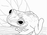 Free Frog Coloring Pages for Kids Coqui Frog Super Coloring