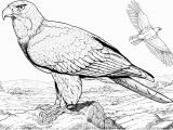 Free Printable Bald Eagle Coloring Pages American Bald Eagle Coloring Page