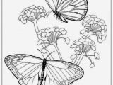 Free Printable Coloring Pages Of Flowers and butterflies butterfly and Flower Coloring Pages for Adults at