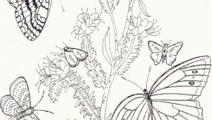 Free Printable Coloring Pages Of Flowers and butterflies Free Printable butterfly Coloring Pages for Kids