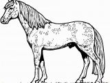 Free Printable Horse Coloring Pages for Adults Advanced Beautiful Free Printable Horse Coloring Pages