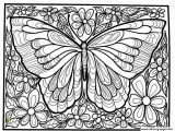 Free Printable Insect Coloring Pages Print Adult Difficult Big butterfly Coloring Pages