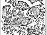 Free Printable Ocean Coloring Pages for Adults Ocean Coloring Pages at Getcolorings