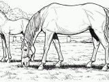 Free Printable Realistic Horse Coloring Pages Free Printable Realistic Horse Coloring Pages Free