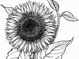 Free Sunflower Coloring Pages for Adults Blooming Sunflower Coloring Page Supercoloring