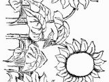 Free Sunflower Coloring Pages for Adults Sunflowers