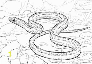 Garter Snake Coloring Page Plains Drawing at Getdrawings