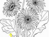 Gerbera Daisy Coloring Page 400 Best X Line Drawings Flowers 1 Images