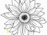 Gerbera Daisy Coloring Page Daisy Sunflower