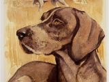 German Shorthaired Pointer Coloring Page Details About German Shorthaired Pointer Vintage Dog Art