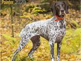 German Shorthaired Pointer Coloring Page German Shorthair Pointer Calendar 2020 Dog Breed Calendar Wall Calendar 2019 2020