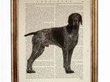 German Shorthaired Pointer Coloring Page German Shorthaired Pointer Art Dog Artwork Gsp Art Dog Poster Dog Wall Art Dictionary Art Print Dog Art Print Dog Print Dog Nursery