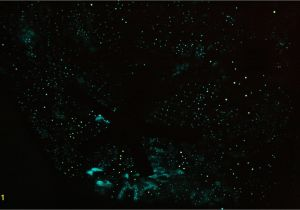 Glow In the Dark Star Murals Night Sky Wallpaper Murals Wallpapersafari