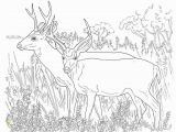 Going On A Bear Hunt Coloring Pages Deer Coloring Pages Free Printable Coloring Pages