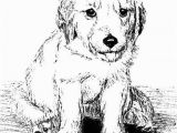 Golden Retriever Puppy Coloring Pages Golden Retriever Puppy Line Art Print Animals