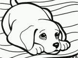 Golden Retriever Puppy Coloring Pages Pinterest