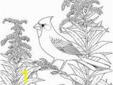 Goldenrod Coloring Page 102 Best Adult Coloring Pages Images On Pinterest In 2018