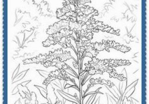 Goldenrod Coloring Page 150 Best Usa State Flowers Images On Pinterest