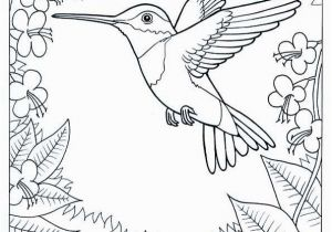 Goldenrod Coloring Page Humming Bird Coloring Page