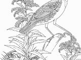 Goldenrod Coloring Page Meadowlark and Wild Sunflower Kansas State Bird and Flower