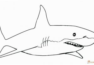 Great White Shark Coloring Pages Great White Shark Coloring Pages Best Bull Shark Drawing at