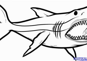 Great White Shark Coloring Pages Great White Shark Coloring Pages New How to Draw Megalodon Megalodon