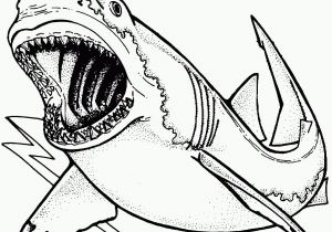 Great White Shark Coloring Pages Shark Coloring Page Great White Shark Coloring Pages Awesome Bull
