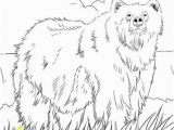 Grizzly Bear Coloring Pages Alaskan Grizzly Bear Coloring Page