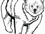 Grizzly Bear Coloring Pages Grizzly Bear Coloring Pages 6859