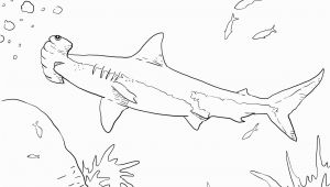 Hammerhead Shark Coloring Page Hammerhead Shark Coloring Page