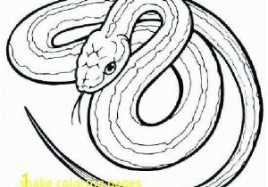 Hammy Coloring Pages Rattlesnake Coloring Page Elegant Red Tail Boa Coloring Coloring