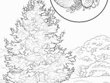 Hawaii State Tree Coloring Page Empire State Building Dimensions Drawing at Getdrawings