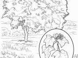 Hawaii State Tree Coloring Page Hawaii Coloring Pages Coloring Chrsistmas