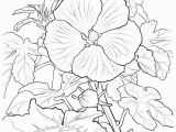 Hawaii State Tree Coloring Page Hawaii Drawing at Getdrawings