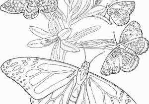 Hearts and butterflies Coloring Pages Free Printable Adult butterfly Coloring Page