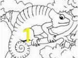 Hermit Crab Coloring Page Eric Carle 1000 Images About Eric Carle On Pinterest